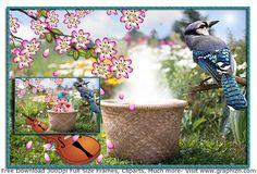 Superb Spring Flowers Baby In Basket Frame