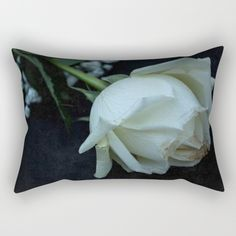 Buy White Rose Rectangular Pillow by xiari_photo. white, rose, romance, romantic, love, black, white, white rose, bloom, blooming, season, spring, happy, emotions, rustic, photo, photography, vintage, lovers, couple, valentines, lover, in love, roses, flower, nature, nature photography, art, wall art, photographer,  still life, digital, dslr, nikon, society6, interior design, fashion, fashion design, beige, pure, calm, innocent, innocence, peace, pure love, art print, framed art print, home…