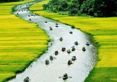 The pediod of time from late May to June is the best time to admire the harvest season in #Ninh_Binh