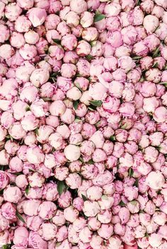 "Paris Peony Photograph ""Peony Season in Paris"""