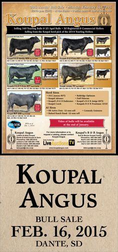 Koupal Angus - 38th Annual Bull Sale - Feb. 16, 2015