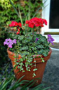 """""""Potted Plant on the Front Porch"""" by pixelmama on Flickr."""