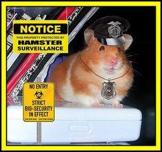 My security job