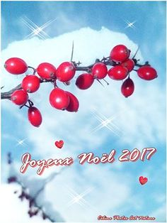 Noël 2017 de Célone Photos Art Nature