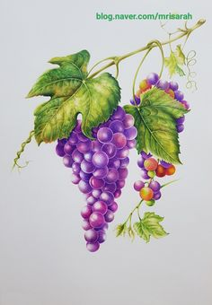 Watercolor Flowers, Watercolor Paintings, Fruit Art, Decoupage, Plant Leaves, Brooch, Artists, Tattoo, Drawings