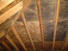 odgrzybianiewiezby dachowej