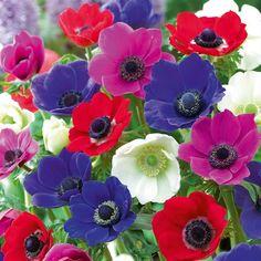 http://sierraflowerfinder.blob.core.windows.net/medias/FlowerPictures/3572/anemone.jpg