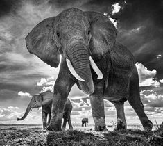 Pin By Mike Lewis On Animals 2