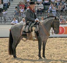 ARGENTINE CRIOLLO HORSE ........ Caballo Criollo ~ Original = (1542 x 1465)   Flickr - Photo Sharing!