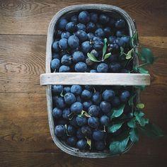 My beautiful relationship with homemade damson jam (plus recipe) — A Bookish Baker Damson Jam, Strawberry Shortcake Characters, Jar Of Jam, How To Make Jam, Jam Recipes, Small Plates, Tray Bakes, Chutney, Preserves