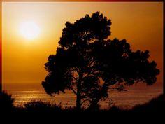 """""""Y habiendo esperado con paciencia alcanzó la promesa"""" (Heb.6:15). En ocasiones las bendiciones de Dios se hacen esperar. Nosotros no podemos ver el futuro, Él si. Por eso nos da lo que necesitamos en el tiempo justo. Ni un segundo antes, ni un segundo después. Debemos ejercitar la paciencia y aprender a confiar en Él. La bendición llegará. La noche terminará y el sol nacerá de nuevo. ;-) (EAF) http://cpm.com.es"""