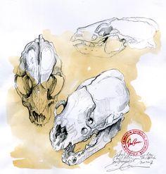 Badger Skull Studies www.duncancameron.org Natural Form Artists, Natural Forms, Gcse Art Sketchbook, Sketchbooks, Sketchbook Layout, Drawing Projects, Art Projects, Duncan Cameron, Art Alevel