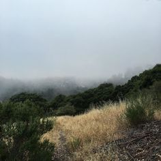 Living for the Bay right now - the fog is giving us mega vibes right now  #oakland #karlthefog #oaklandhills