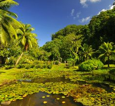 The Vaipahi Gardens in Tahiti offer ponds, a waterfall and many walking paths. Credit: Ty Sawyer