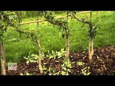 ▶ Querbeet - Spalierobst BR 06.05.2013 - YouTube