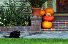 Pumpkins AND a black cat?? Perfect!!