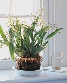 Finally a good idea to house orchids when you live in the south. I didnt think they belonged in pots!