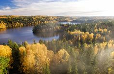 View top-quality stock photos of Forest With Lake In Autumn On Foggy Day Finland. Find premium, high-resolution stock photography at Getty Images. Lappland, Forest Drawing, Castles To Visit, Autumn Scenery, Nature Water, Home Pictures, Lake District, Looks Cool, Monet