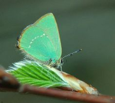 Excellent Article - 10 Fun Facts about Butterflies - I love learning more - do you?