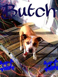 Butchhh My Love, Dogs, Animals, My Boo, Animais, Animales, Animaux, Pet Dogs, Doggies