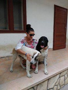 Central Asian Shepherd, dogs, Alabai