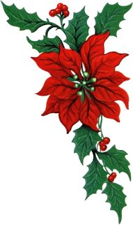 Christmas Poinsettia, Christmas Flowers, Christmas Cards To Make, Christmas Pictures, Christmas Art, Christmas Themes, Vintage Christmas, Christmas Decorations, Xmas