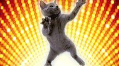 кошки смешные - YouTube