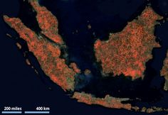 #Biodiversité #hotspot #Sundaland #Environnement