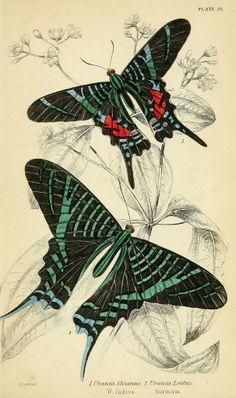 Foreign butterflies  Edinburgh :Henry G. Bohn,1858.