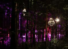 Colossal Sculptural Lights By David Trubridge Have Been Added To A Treewalk In New Zealand