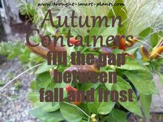 Autumn Containers - fall display into frost