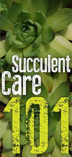 Succulent Care 101 - Infinity Lawn