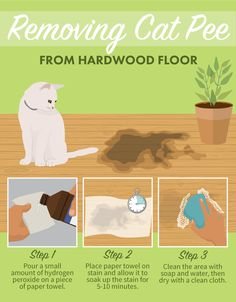 Removing Cat Pee From Hardwood Floor - Stain Removal
