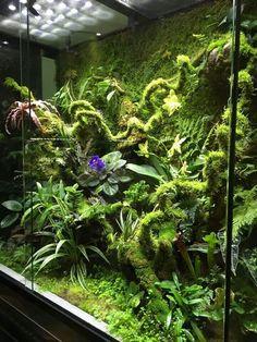 Terrarium And Aquarium 1000 Aquarium Ideas Gecko Terrarium, Aquarium Terrarium, Reptile Terrarium, Moss Terrarium, Terrarium Plants, Gecko Vivarium, Terrarium Cameleon, Plante Carnivore, Reptile House
