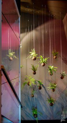 fiu – jardins suspensos na loja Eureka shoes, Rua Sta Catarina, Porto, Portugal #Kokedamasideas