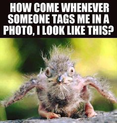 Funny Pictures Of The Day - 35 Pics http://ibeebz.com
