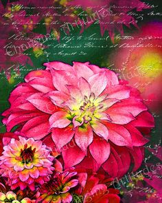 ART WATERCOLOR DAHLIAS Pink Digital Print by ChangingArtitudes