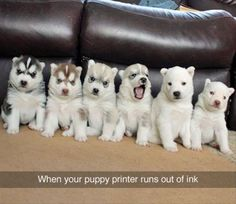 When your puppy printer runs out of ink. #cute #adorable #siberianhusky #puppies