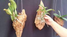 Cuál es el sustrato adecuado para cada tipo de orquídeas