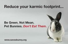 Reduce your karmic and carbon footprint, we have no need to eat animals so why cause pain, why kill? Cute Bunny, Bunny Rabbit, Benny And Joon, Rabbit Facts, New Zealand Rabbits, Raising Rabbits, Intelligent People, House Rabbit, Pets 3