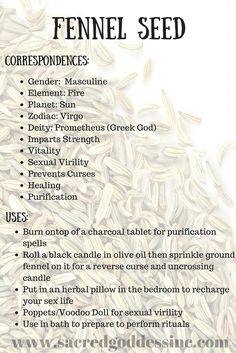 The Magick of Herbs: Fennel Seeds (Printable for Your BOS) – Witches Of The Craft® Magic Herbs, Herbal Magic, Plant Magic, Wiccan Spells, Witchcraft Herbs, Hoodoo Spells, Gypsy Spells, Green Witchcraft, Magic Spells