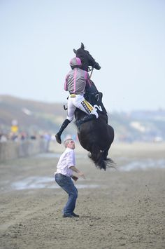 Jockey Johnny King hangs on as his mount Arbritrageur went airborne before a race at Ireland's Laytown Racecourse. (Photo: Healy Racing, via The guys face. Horse Rearing, Horse Fly, Thoroughbred Horse, Horse Love, Appaloosa Horses, Pretty Horses, Beautiful Horses, Funny Horses, Funny Animals