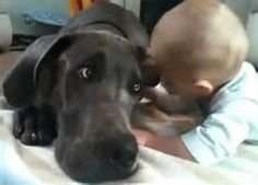 Great Dane cuddles with baby