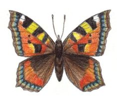 Kevätseuranta opetukseen | Luonto-Liiton Kevätseuranta Moth, Bee, Drawings, Animals, Honey Bees, Animales, Animaux, Bees, Sketches