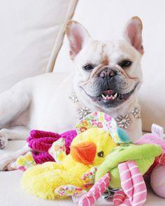 Martha Stewart Pets #SuperFan: @FrannyTheFrenchie