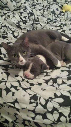 Her new kitten is odd, but she still loves her. - Imgur
