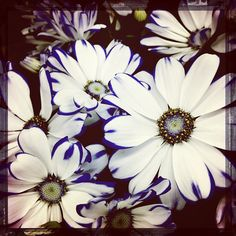 Flower - @quksilver   Webstagram