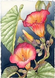 "painting title ""Janine's Hawaiian Bells,"" by watercolor artist Barbara Groenteman Silk Painting, Watercolour Painting, Watercolor Flowers, Painting & Drawing, Watercolors, Botanical Art, Botanical Illustration, Illustration Art, Arte Floral"
