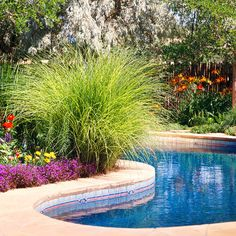 Gorgeous plantings around the pool...miscanthus