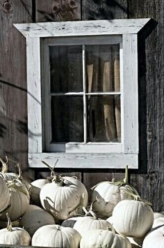 Cinderella pumpkins - Autumn | Fall